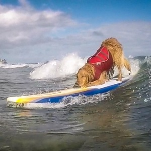 Surfdog Turbo